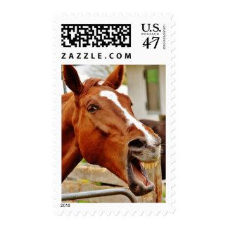 Franqueo de risa del caballo timbres postales