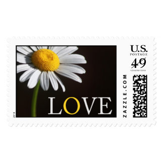 Franqueo del amor de la margarita blanca sellos postales