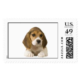 Franqueo del beagle