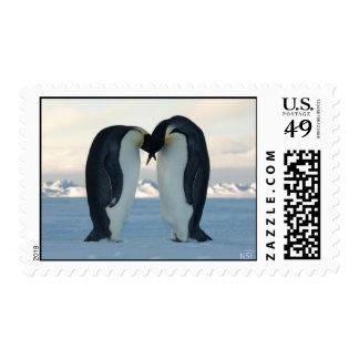 Franqueo del beso del pingüino de emperador sello postal