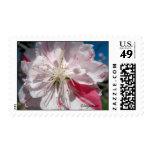 Franqueo del boda de la flor de cerezo