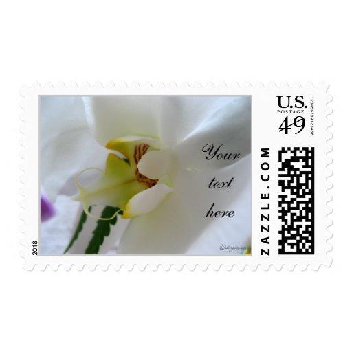 Franqueo del boda de la foto del Phalaenopsis pers