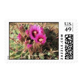 Franqueo del cactus de barril de la lengua del sello