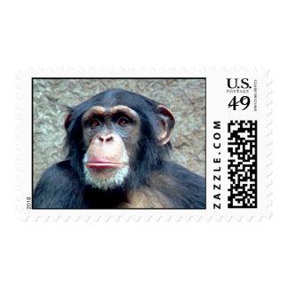 Franqueo del chimpancé timbres postales