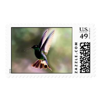 Franqueo del colibrí sello