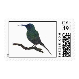 Franqueo del colibrí