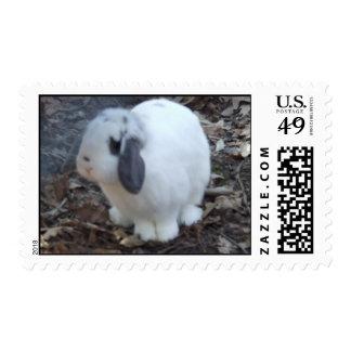 Franqueo del conejo de conejito