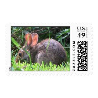 Franqueo del conejo de conejo de rabo blanco