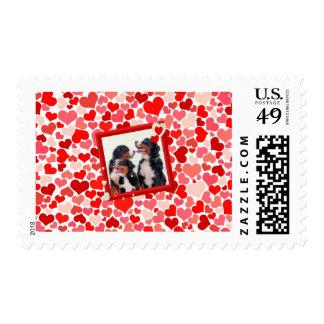 Franqueo del corazón del perro de montaña de timbre postal