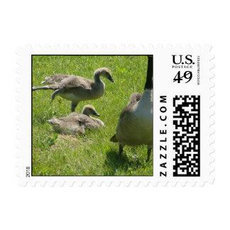 Franqueo del estiramiento del ganso del bebé timbres postales