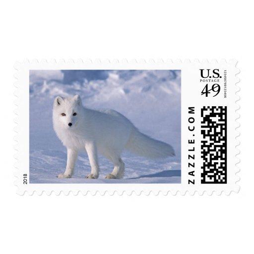 Franqueo del Fox ártico Estampillas