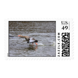 Franqueo del ganso silvestre sellos postales