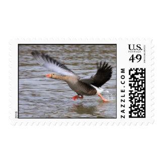Franqueo del ganso silvestre timbres postales