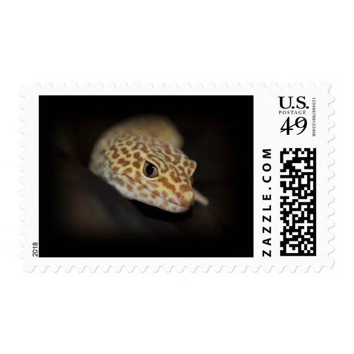 Franqueo del Gecko del leopardo
