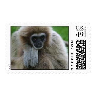 Franqueo del Gibbon