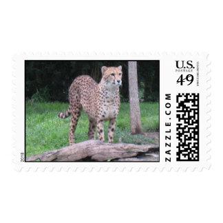 Franqueo del guepardo (personalizable)