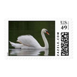 Franqueo del lago swan