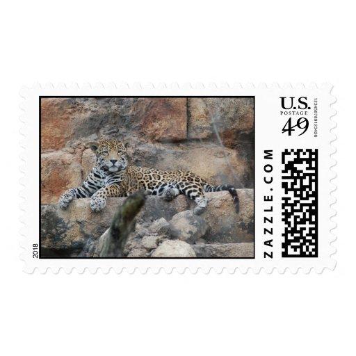 Franqueo del leopardo sellos