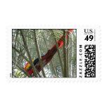 Franqueo del Macaw