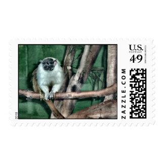 Franqueo del mono del Tamarin
