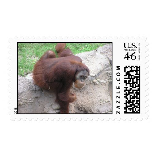 Franqueo del orangután