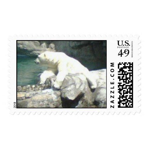 Franqueo del oso polar