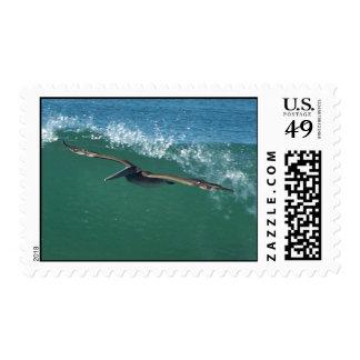 Franqueo del pelícano que practica surf