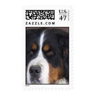 Franqueo del perro de montaña de Bernese Timbres Postales