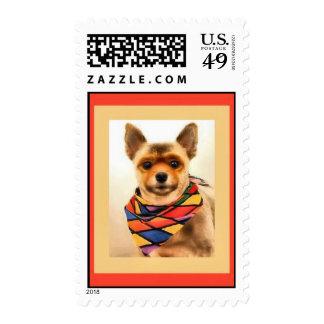 Franqueo del perro de perrito de Pomeranian