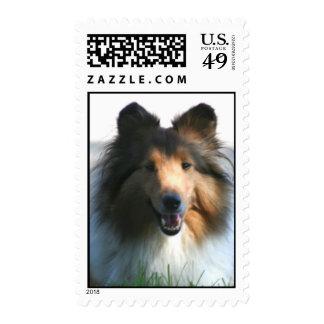 Franqueo del perro pastor de Shetland