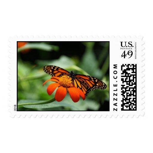 Franqueo del personalizado de la mariposa de monar