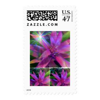 Franqueo del proyecto de octubre sello postal
