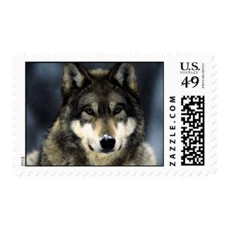 Franqueo del retrato del lobo sello postal