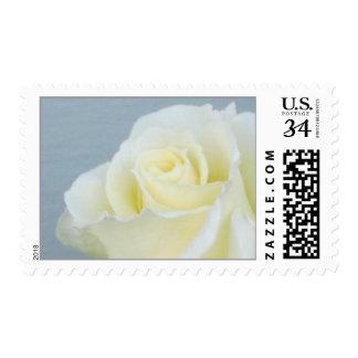 Franqueo del rosa blanco (centavo 29)