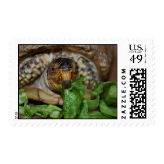 Franqueo delicioso de la tortuga de la lechuga sellos