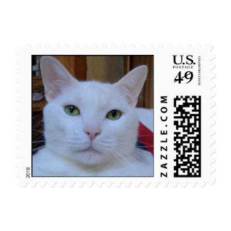 Franqueo dignificado del gato sellos