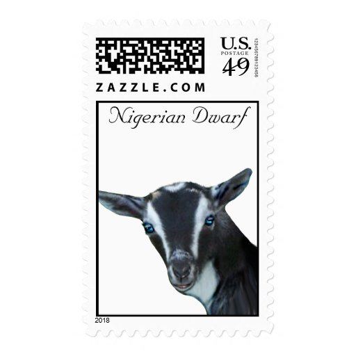Franqueo enano nigeriano de la cabra de la lecherí