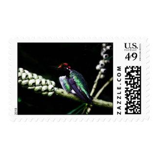 Franqueo exquisito de la foto del colibrí sellos