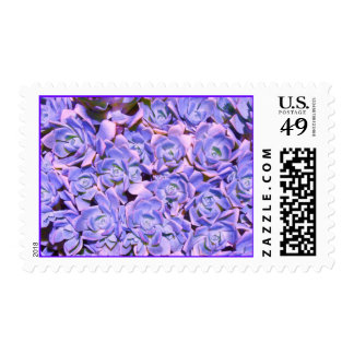 Franqueo floral azul alterado de los Succulents