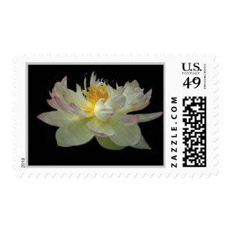 Franqueo floral blanco y rosado timbres postales