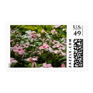 Franqueo floral del bígaro