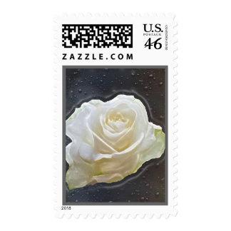 Franqueo floral del rosa blanco