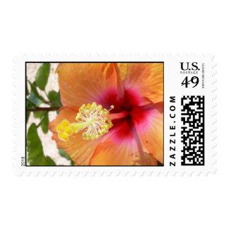 Franqueo floreciente del hibisco