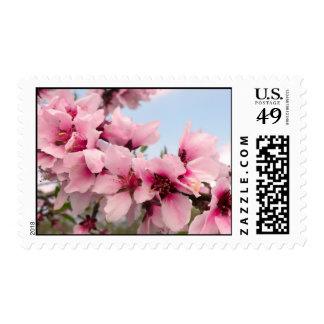 Franqueo floreciente rosado de la rama timbre postal