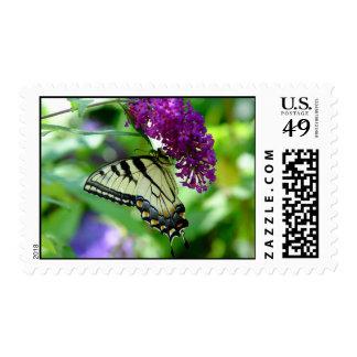 Franqueo hermoso de la mariposa timbres postales