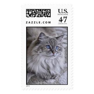Franqueo Himalayan de Sophie del gato del rescate Sello