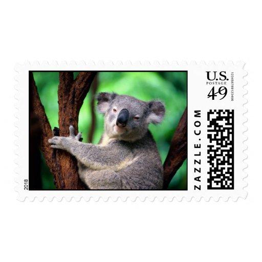 ¡Franqueo-Koala tan linda!