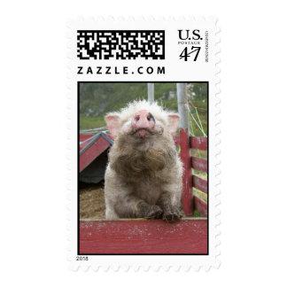 Franqueo miniatura canadiense del cerdo sello postal