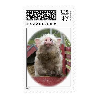 Franqueo miniatura canadiense del cerdo timbres postales