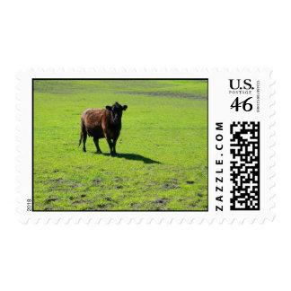 Franqueo negro de la vaca